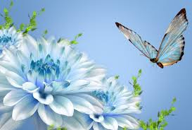nature wallpaper hd butterfly free download