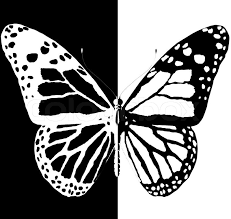 silhouette of butterfly on a black and white background stock