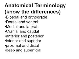 Human Anatomy Terminology Biology 223 Human Anatomy And Physiology Week 1 Lecture 1 Monday