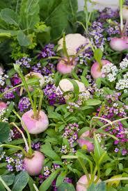 673 best beautiful vegetable gardens images on pinterest veggie