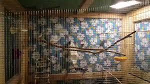 Avian Sun Floor Lamp by Finch Birds Got A New Uva Uvb Light Youtube