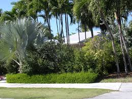native plant landscaping landscaping with florida native plants blog archive beach