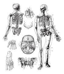 representation vintage skeleton vintage coloring pages for