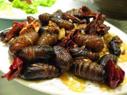 insecte cuisine les plats d insectes de plus en plus au menu des restaurants