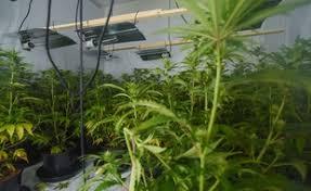 chambre de culture cannabis complete alsace il transforme une chambre de appartement en un