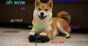 Shiba Inus Meme - doge shiba inu doge meme dog rescue pinterest doge