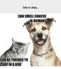 Dog Cat Meme - 25 best memes about cats vs dogs cats vs dogs memes