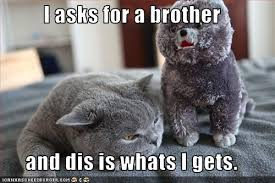 Middle Finger Cat Meme - big brothers melissa mcclone