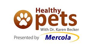 pet bereavement more companies offer paid pet bereavement days