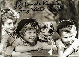 american pit bull terrier history little rascals pit bull pete jpg