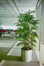 lovely artificial office plants artificial bamboo tree in a