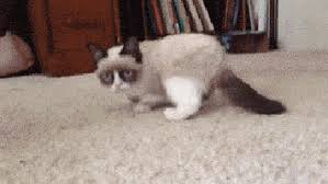 Grumpy Cat Meme No - grumpy cat nope gifs tenor