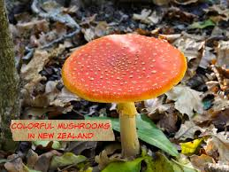 photos colorful mushrooms seen while hiking in auckland