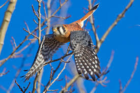 Indiana Birds images Dnr officials say birds face threat to survive in winter news jpg