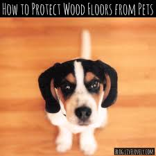 how to protect wood floors from pets lovely