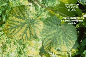 Deficiency Diseases In Plants - diagnosis a visual reference to nutrient deficiencies in plants