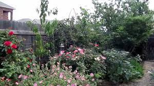 texas native plants landscaping xeriscape plants in the landscape designer lisa lapaso avery