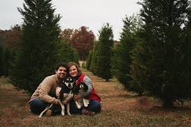 christmas tree farm couple pictures arkansas christmas pictures