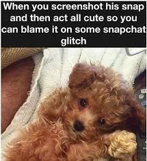 Cute Dog Memes - 13 funniest teddy bear dog memes