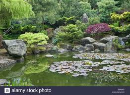 garden pond with rocks water lilies and trees in garden design by