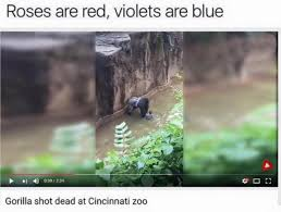Roses Are Red Violets Are Blue Meme - harambe roses are red