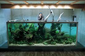 amano aquascape l aquarium particulier de takashi amano le journal de l aquascaping