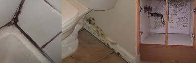 mold inspection and remediation kitchen and bathroom mold removal