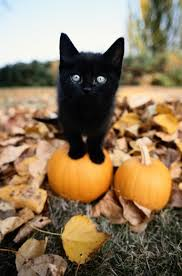 halloween cat meme selling your house in the fall spruce grove stony plain parkland