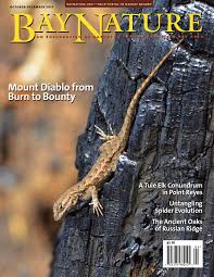 growing more butterflies in south east queensland gecko hills to bay nature october december 2017 by bay nature institute issuu