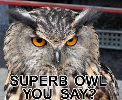 Superb Owl Meme - superb owl