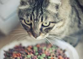 toxoplasma gondii parasite in cat linked to schizophrenia