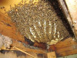 remove honey bees from house mike u0027s tech blog