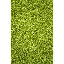 Area Rug Green Noble House Sara Lime Green Shag Area Rug U0026 Reviews Wayfair