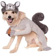 small large cat costumes for your pet