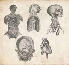 old anatomy pack by tobi wan on deviantart