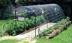Curved Trellis Fence Panels Use Cattle Panels To Build An Arched Trellis U0026 Hoop House Dave U0027s