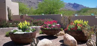 residential potted gardens the contained gardener tucson az