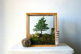15 lovely terrariums that would liven up any room mental floss