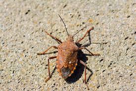 was ist das für ein insekt eine wanze oder was urlaub insekten insekt wanze stockbild bild insekt nahaufnahme 53464543