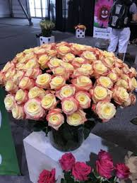 roses wholesale roses on sale 50 roses orange county wholesale flowers