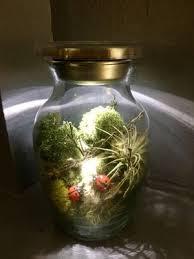 terrariums air plants succulents u0026 accessories home u0026 garden