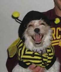 41 pictures of dogs dressed as bees who are ready af for halloween