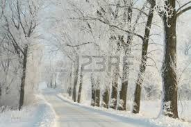 winter country road among frosted maple trees on a morning