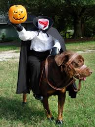 15 animals who dressed up for halloween humour anna walker