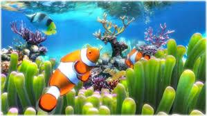 wallpaper ikan bergerak untuk pc dream aquarium screensaver download