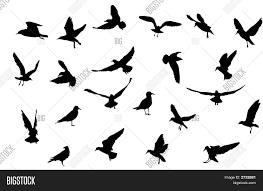 bird silhouettes vector u0026 photo bigstock