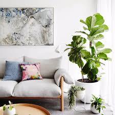 house plants popsugar home