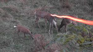 bowhunting double deer morning youtube