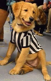 Pet Halloween Costumes Dogs Referee Dog Halloween Costume Dog Halloween Costumes