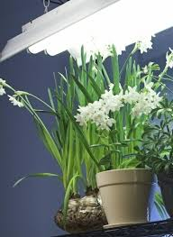 types of grow lights fluorescent grow lights learn about different types of grow lights